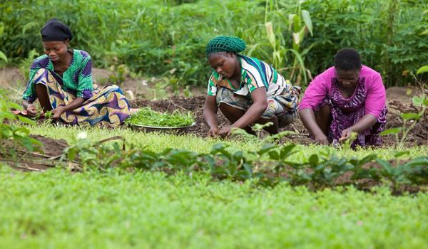 """POURQUOI L'AGRICULTURE EST DEVENUE LE """"NOUVEAU PÉTROLE"""" DU NIGERIA par Forbes."""